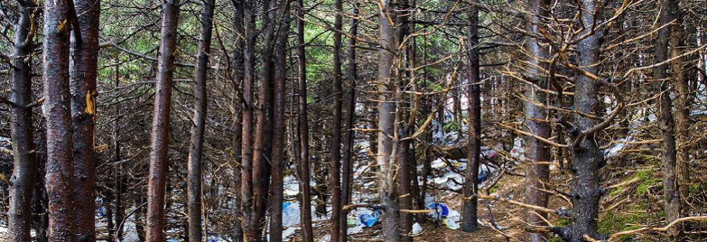 Znečisťovanie lesov plastami